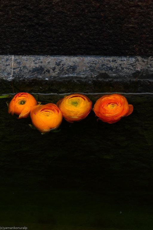 yaman konuralp photography zen garden zen flowers